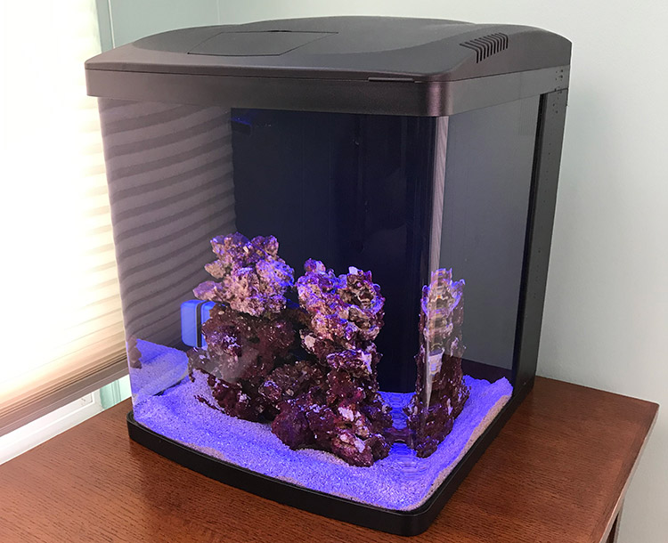 How to Cycle a Nano Reef Tank Safely