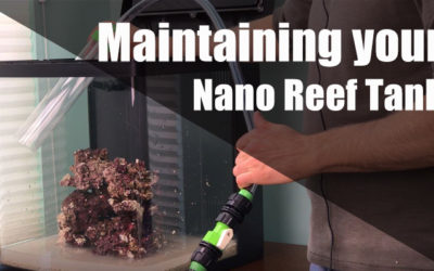 How to maintain a nano reef tank