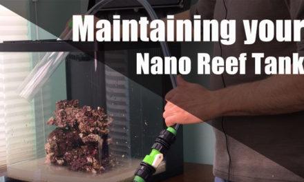 How to maintain a nano reef tank