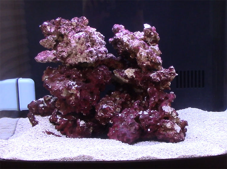 How to Select Live Rock for Your Nano Reef Aquarium