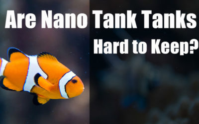 Are Nano Reef Tanks Hard to Keep?