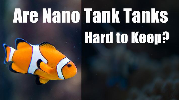 Are Nano Reef Tanks Hard to Keep?