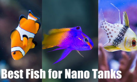 Best Fish for a Nano Reef Tank (With Pictures)
