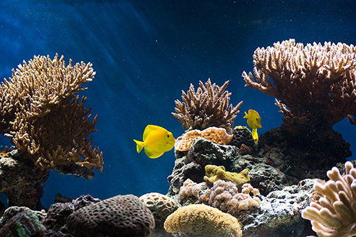 The Best Way To Aquascape Your Nano Reef Tank Nano Reef Tanks Saltwater Fish Aquariums Education And Tips